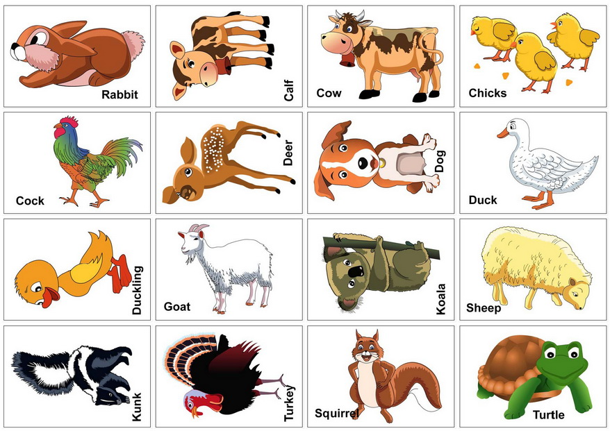 Farm Animals Flash Cards