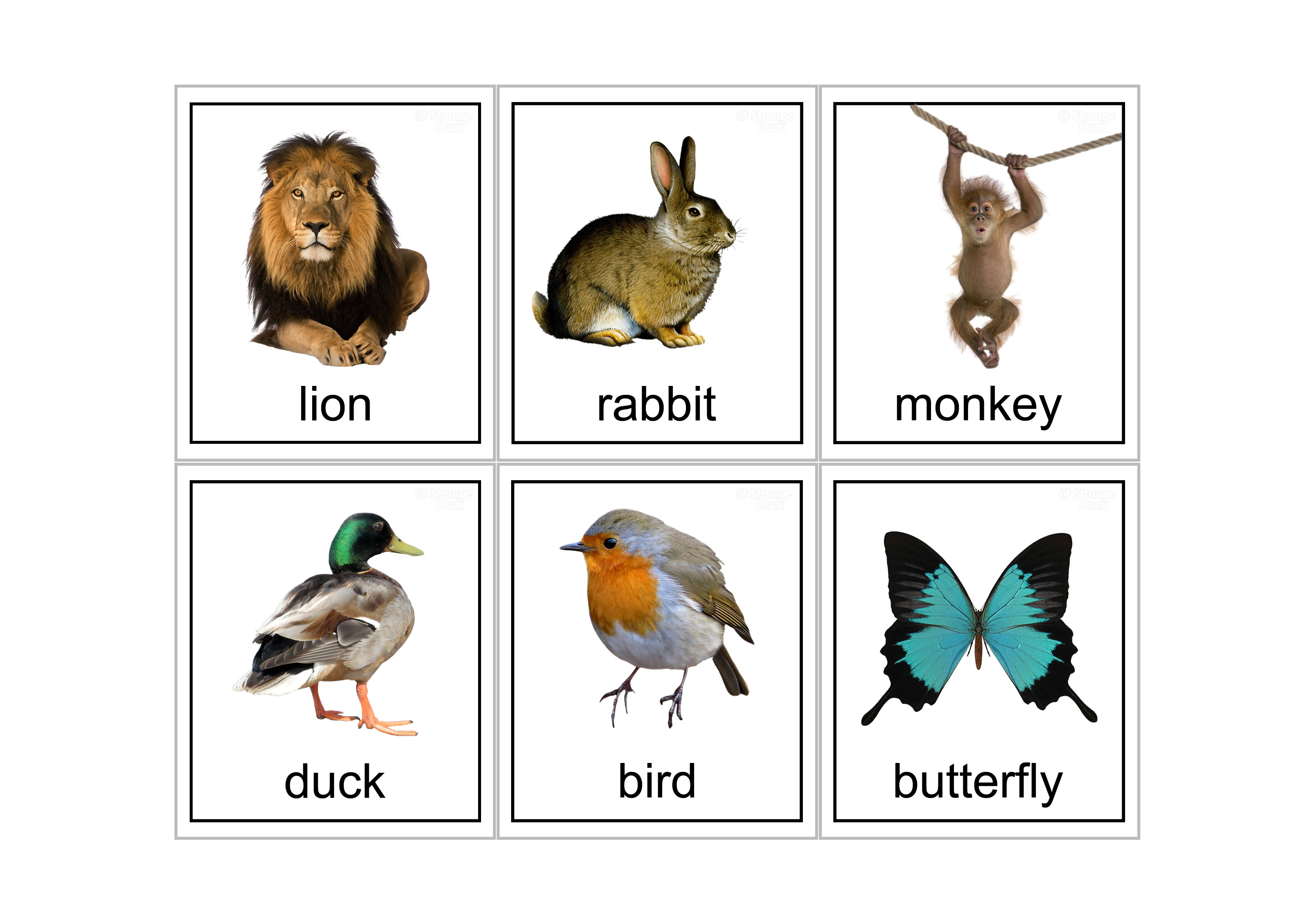 It is a photo of Canny Printable Animal Flash Cards