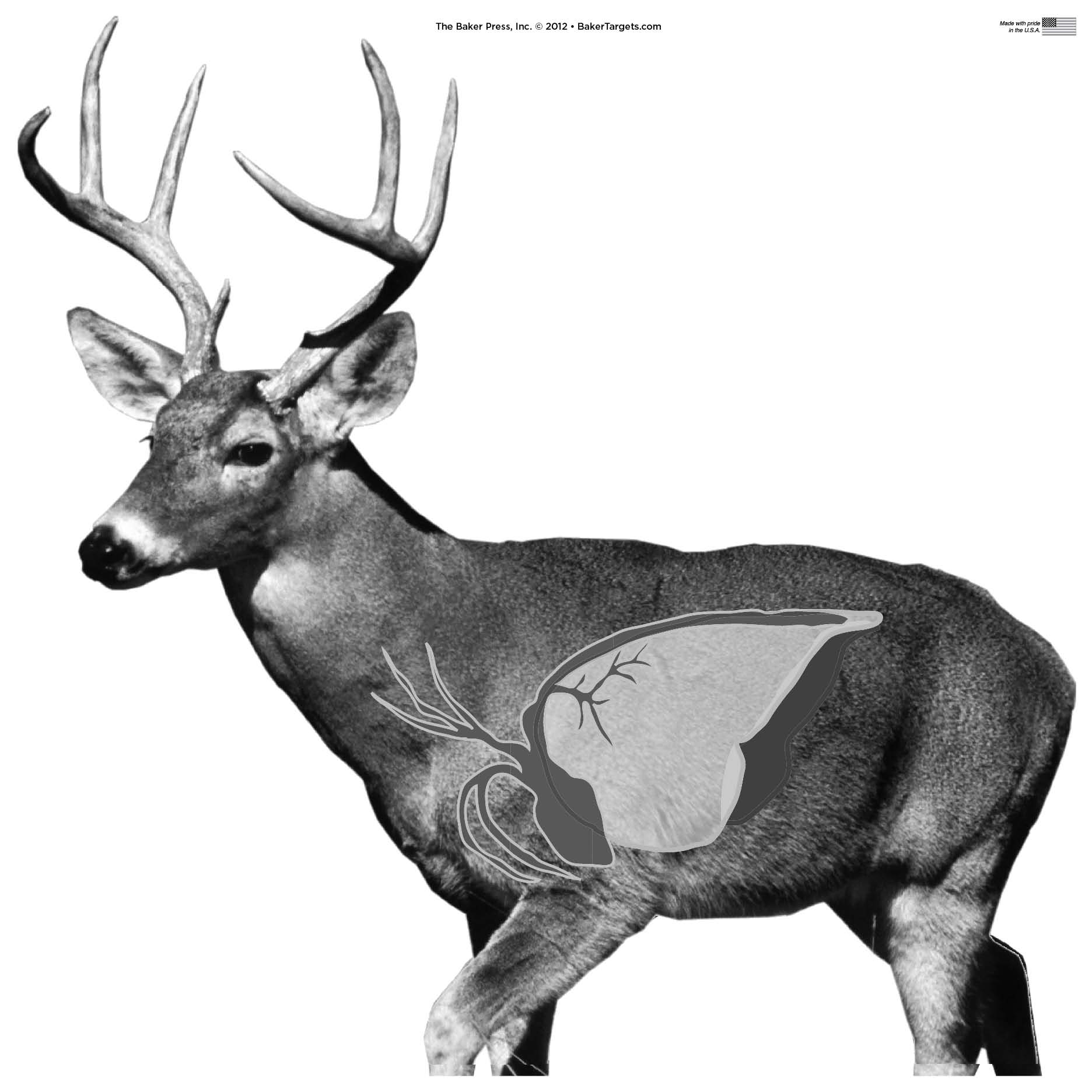 image relating to Printable Deer Target identify Conclusion -\u003e Printable Deer Ambitions -