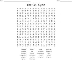 Cell Cycle Word Search Puzzle